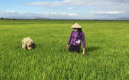 Hóa chất Lâm Thao (LAS) báo lãi trước thuế gần 40 tỷ đồng quý 1, giảm 28% so với cùng kỳ