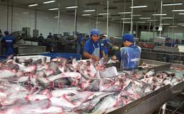 Kiểm soát chất lượng cá tra sang Trung Quốc
