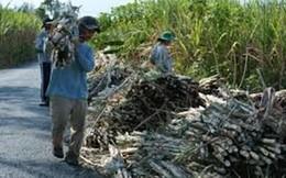 Chủ tịch Hiệp hội Mía đường: Đề xuất tăng thuế tiêu thụ đặc biệt đối với nước ngọt tạo áp lực lên ngành đường