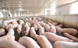 CEO công ty nuôi lợn nhận lương cao hơn cả Tim Cook hay Elon Musk