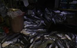 [Photo] Cận cảnh cá chết nổi trắng sông La Ngà ở Đồng Nai