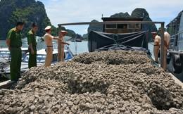 Bắt giữ 30 tấn hàu giống không nguồn gốc, trị giá hơn 300 triệu đồng