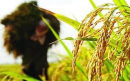 Không dễ nâng cao giá trị gia tăng cho nông dân