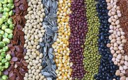 Nhập khẩu ngô, đậu tương, lúa mì liên tục tăng rất mạnh