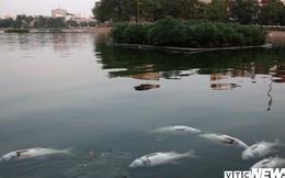 Nguyên nhân cá chết nổi trắng mặt hồ Hoàng Cầu, Hà Nội