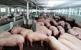 Bộ Nông nghiệp: Giá lợn hơi tăng, không nên tái đàn ồ ạt