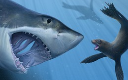 """Nhà đầu tư chú ý: """"Cá mập"""" đang âm thầm thoát hàng khi thị trường hồi phục!"""