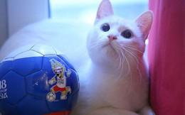 Mèo tiên tri dự đoán Nga thắng trận mở màn World Cup 2018