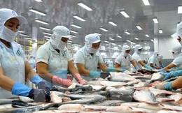 Trung Quốc sắp trở thành nhà nhập khẩu thuỷ sản lớn nhất của Việt Nam?