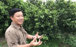 Tây Ninh chuyển đổi cao su, lúa, mì... sang cây ăn quả