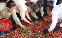 Chợ họp đến nửa đêm, người trồng vải thu về hơn 3.410 tỷ đồng