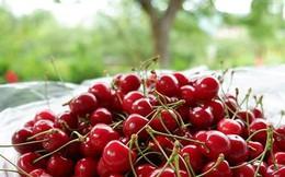 Trái cây ngoại siêu đắt tại Việt Nam là cây dại ở nước ngoài?