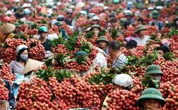 Bắc Giang mỗi ngày bán được hơn 6.000 tấn vải thiều