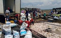 Đồng Nai: 1.500 tấn cá chết trên sông La Ngà là do thiên tai