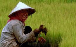 Điều gì khiến Campuchia từ quốc gia đói nghèo, sau 10 năm có gạo xuất khẩu tới 63 thị trường, thu nhập người nông dân tăng 100% chỉ nhờ trồng lúa?