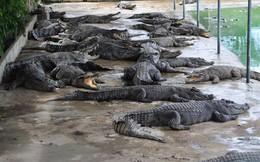 """Người nuôi cá sấu """"được cứu"""""""