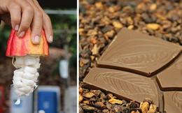 Hành trình biến hạt ca cao thành món chocolate vạn người mê qua lời kể của người thợ lành nghề