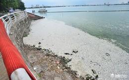 Mặc cá chết nổi trắng hồ Tây, người dân vẫn ra hồ tắm giải nhiệt