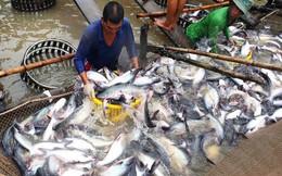 VASEP khuyến cáo DN kiểm soát chất lượng cá tra, basa xuất khẩu sang Trung Quốc