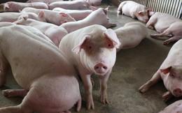 Giá lợn hơi trở lại mốc 50.000 đồng/kg, thịt lợn ngoài chợ cũng tăng giá mạnh