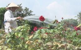 Người sở hữu hơn 40.000 chậu hoa hồng