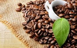Giá cà phê trong nước giảm xuống mức thấp 26 tháng