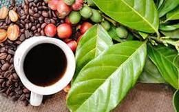 Giá cà phê khó tăng vì thị trường thiếu lực mua