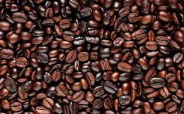Giá cà phê trong nước vẫn đứng ở mức thấp 26 tháng