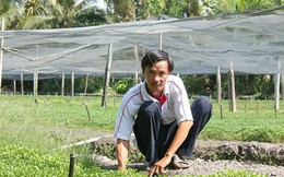 Thu nhập hàng trăm triệu từ mô hình trồng cải xà lách xoong