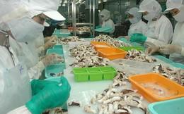 Xuất khẩu mực, bạch tuộc chuyển hướng sang Thái Lan, cạnh tranh với Trung Quốc