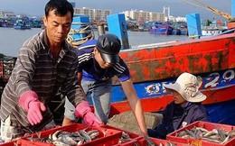 Xăng dầu tăng giá, sản lượng đánh bắt giảm khiến ngư dân lỗ nặng