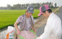 Sản xuất, kinh doanh phân bón kém chất lượng ngày càng tinh vi