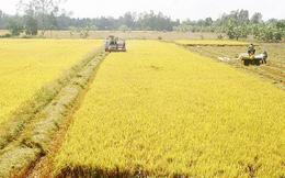 Thủ tướng chấp thuận chuyển mục đích sử dụng 32,7 ha đất trồng lúa tại Hà Nam sang đất phi nông nghiệp