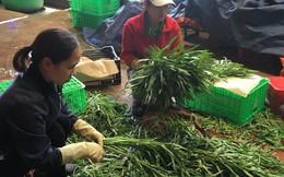 """TP HCM nhập nông sản, """"nhập"""" luôn hàng trăm tấn rác mỗi đêm"""