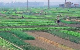 TPHCM đề nghị được chuyển đổi 26 ngàn ha đất nông nghiệp