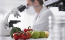 Cây trồng biến đổi gen mang lại lợi ích lâu dài cho nông nghiệp Việt?