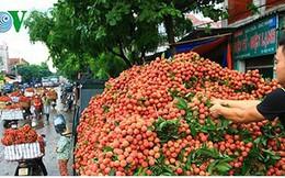 Vải thiều Bắc Giang đã xuất đi hơn 30 nước, giá trị 153 triệu USD