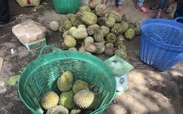 Kỳ lạ: Ăn sầu riêng rồi bán lại hạt với giá cao ở Lâm Đồng