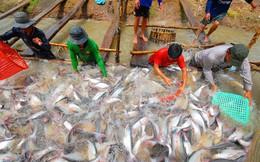 Doanh nghiệp thủy sản lãi lớn trong nửa đầu năm 2018