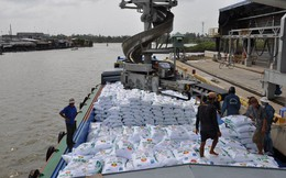 Bình quân mỗi tháng Việt Nam nhập siêu trên 200 nghìn tấn phân bón