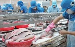 Chiến tranh thương mại Mỹ - Trung: Cơ hội cho cá tra Việt Nam tại thị trường Mỹ