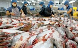 """Cá tra Việt Nam và cuộc chiến """"giành giật"""" thị trường Mỹ"""