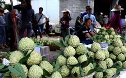 [Photo] Lạng Sơn được mùa na, sản lượng ước đạt hơn 30.000 tấn