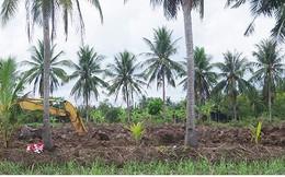 """Hàng ngàn ha mía ở Trà Vinh """"đói"""" vốn đầu tư tái vụ"""