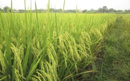 Giống cây trồng Miền Nam (SSC) muốn hủy niêm yết trên HoSE