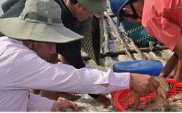 Nuôi tôm siêu thâm canh thu tới 50 tấn/ha mỗi vụ ở Cà Mau