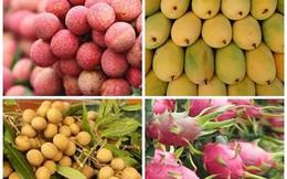 Xuất khẩu rau quả gặp khó những tháng cuối năm?