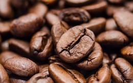 Giá cà phê tiếp tục ở mức đáy nhiều tháng