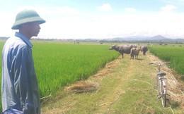 """Nhiều khoản phí """"lạ"""" ở Quảng Bình: Trâu, bò, vịt, máy cày,… ra đồng phải đóng phí"""