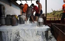 Cấm bán 1.400 loại sữa công thức, Trung Quốc trở thành miền đất hứa cho các hãng sữa ngoại